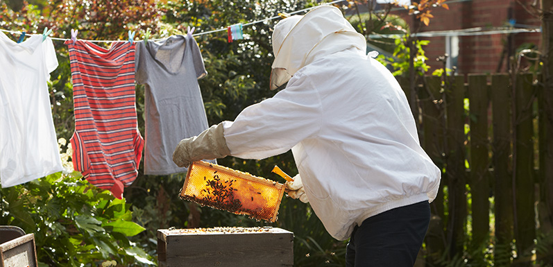 Common Mistakes For New Beekeepers