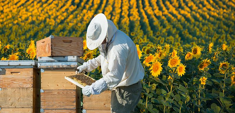 Understanding The Most Essential Beekeeping Tools: Part 1