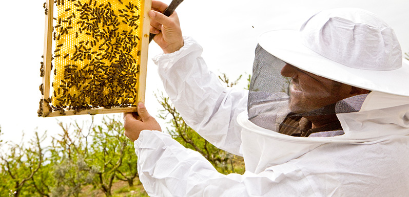 LESSON 10: How to Manage Bees
