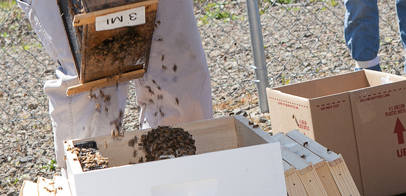 Bee Chronicles by Alan -- Installation of New Bees