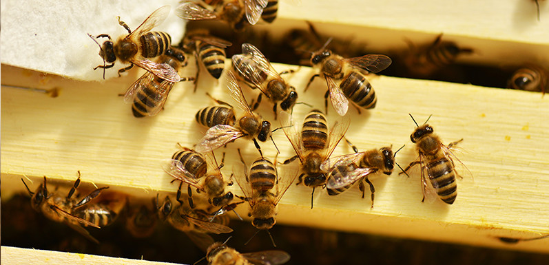 4 Tips Any New Beekeeper Should Follow