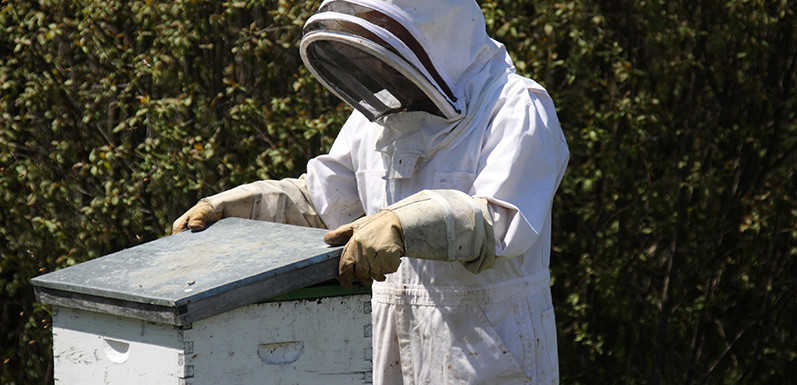 Novice's guide to Starting Beekeeping