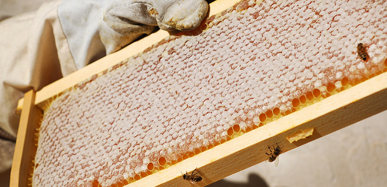 Alan's Bee Chronicles - Oh Sweet Honey!