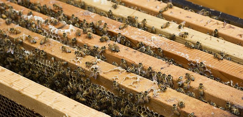 Alan's Bee Chronicles - Fall Bee Treatment