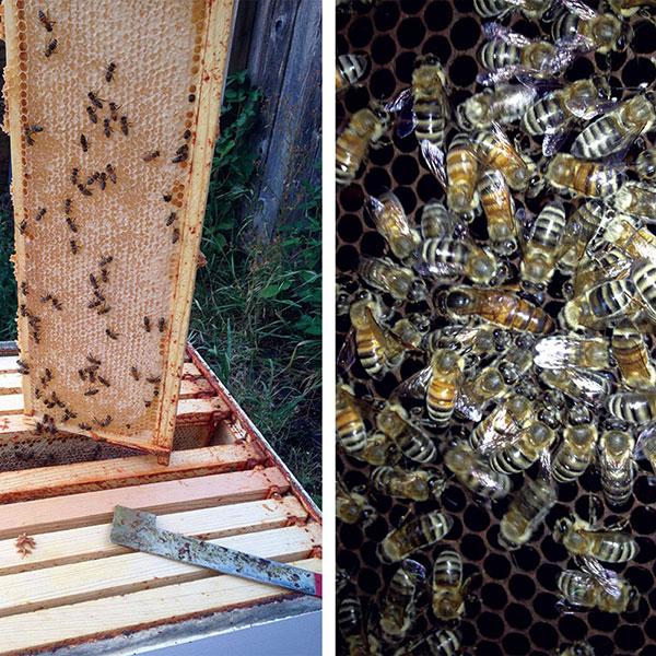 Alan's Bee Chronicles - Looking forward to harvest season!