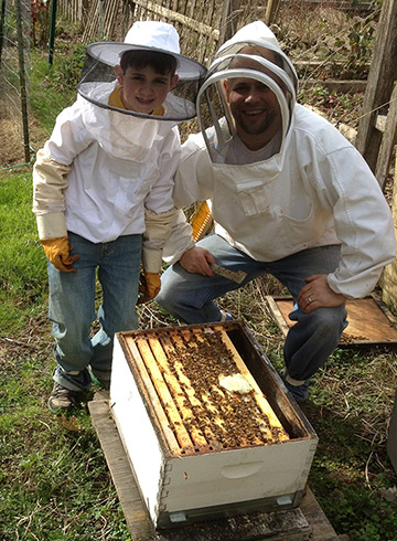 Alan's Bee Chronicles - Colony Check - All is Well!