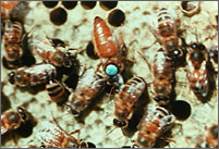 Beekeeping FAQ
