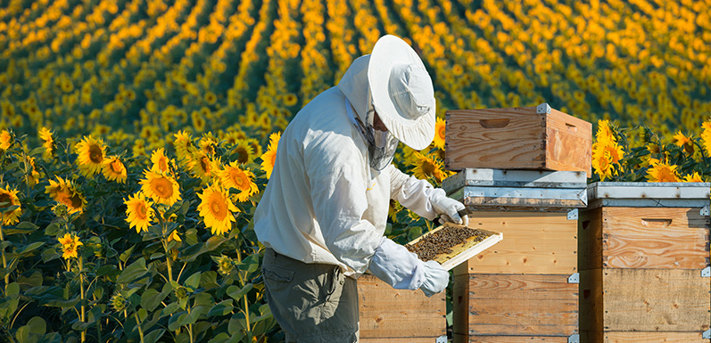 Want to Become a Beekeeper?