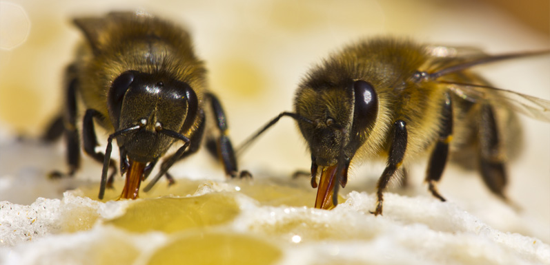 Which Bees are the Best for Me?