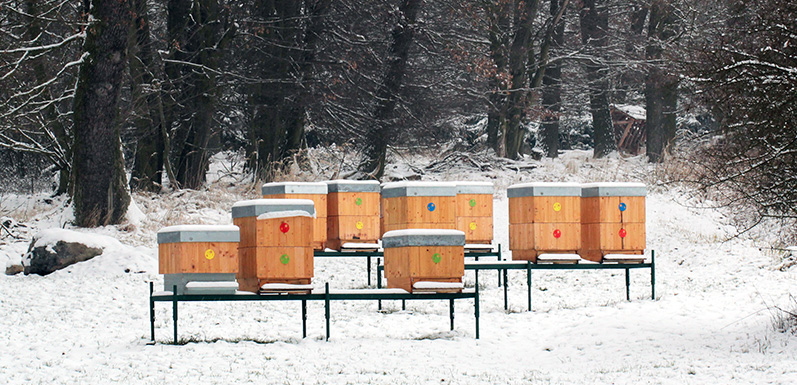 How To Winterize Your Hives [Part 1]
