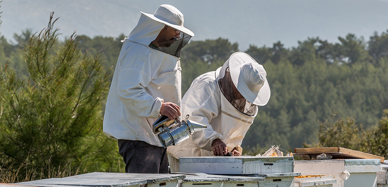 Top 3 indicators of a quality beekeeping class