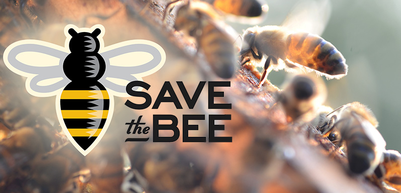 5 Practical Tips to Help Save the Bees