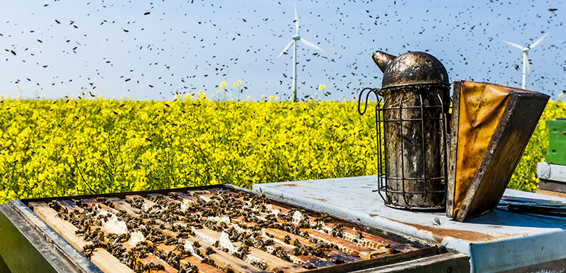 Beekeeping Basics: Most Effective Ways to Use a Bee Hive Smoker