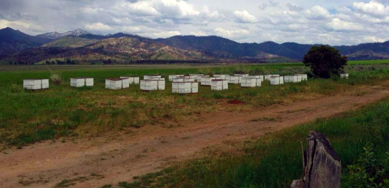 Partner Spotlight: Where do we Source our Wildflower Honey?