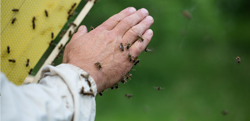 Are Your Bees Right or Left Handed?