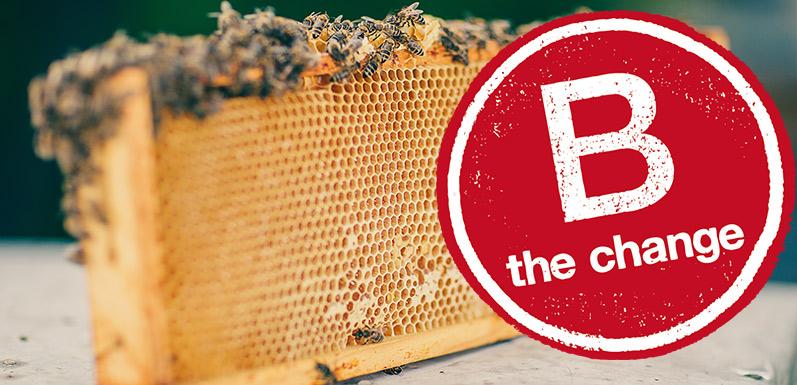 The Change We Seek: Save the Bee
