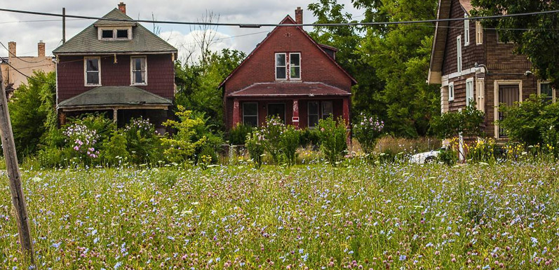 Beekeepers are Transforming Detroit