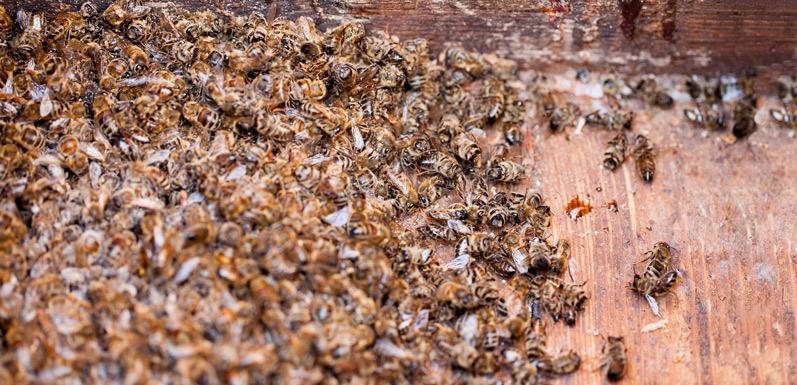 Why Did My Bees Die? Part 2 Of 2