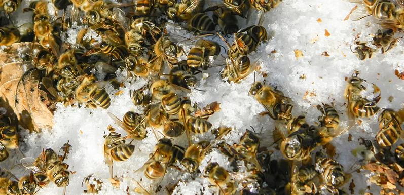 Why did my bees die? Part 1 of 2