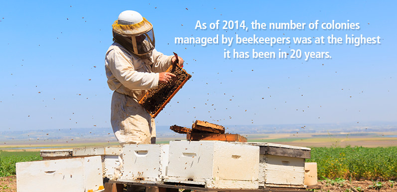 New To Beekeeping? Here Are Some Dos And Don'ts To Keep In Mind