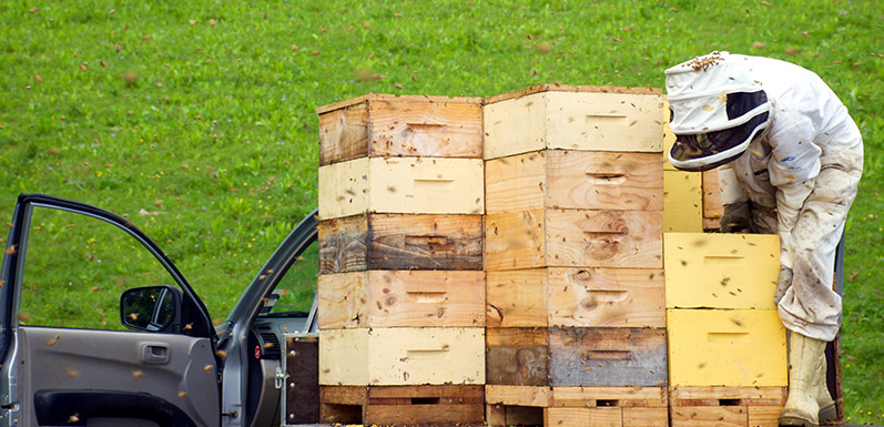 Honey Supers: What's Right For Your Hive?