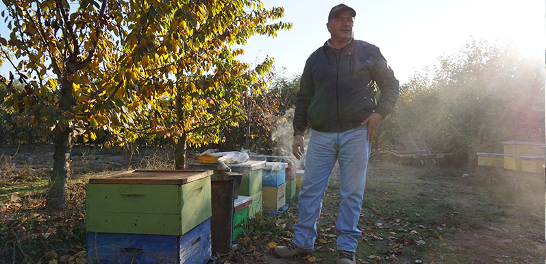 Bees Provide Boost to Coffee Farmers