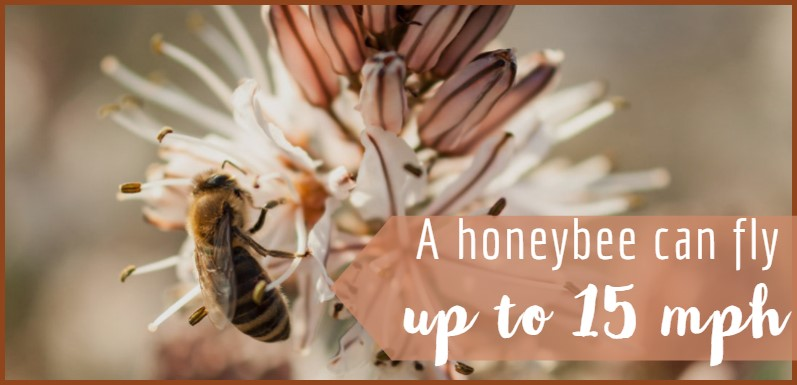 5 Essential Pieces of Equipment No Beekeeper Could Live Without