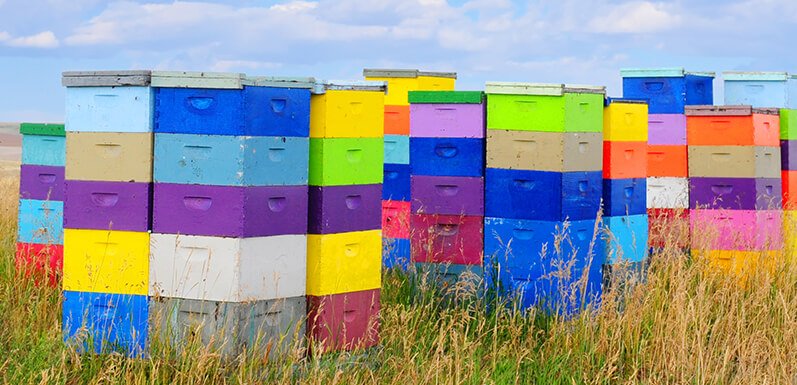 Now is the Time to Paint Your Hives