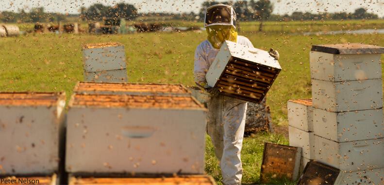 Pausing for Pollinators